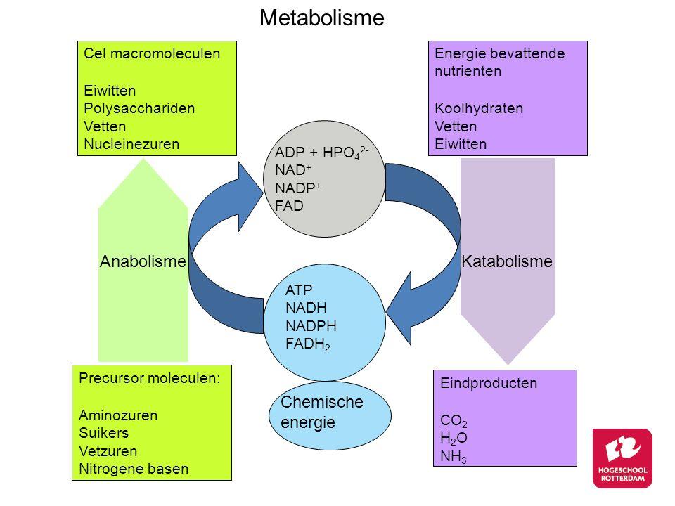 Metabolisme Anabolisme Katabolisme Chemische energie