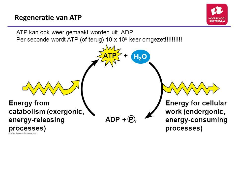 Regeneratie van ATP ATP H2O