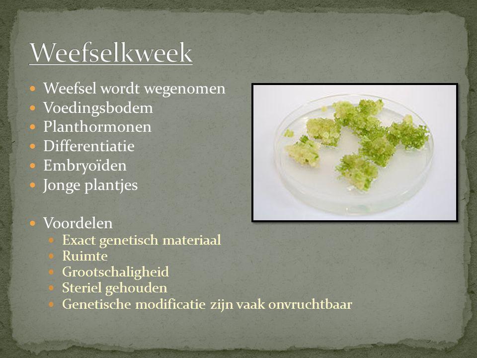 Weefselkweek Weefsel wordt wegenomen Voedingsbodem Planthormonen