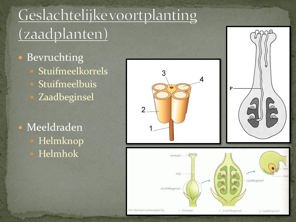 Geslachtelijke voortplanting (zaadplanten)