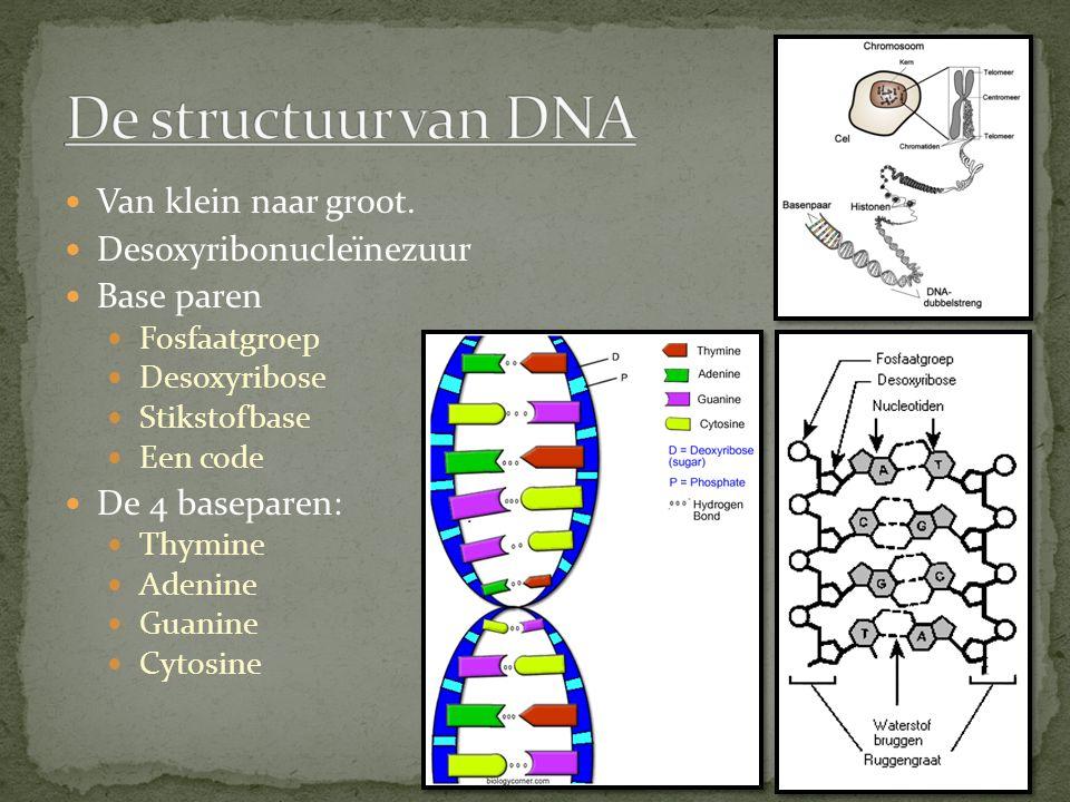 De structuur van DNA Van klein naar groot. Desoxyribonucleïnezuur