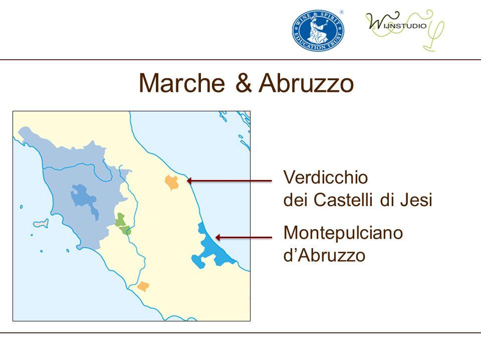 Marche & Abruzzo Verdicchio dei Castelli di Jesi Montepulciano