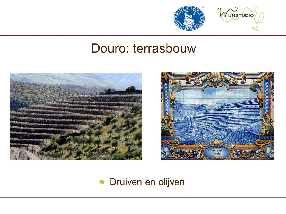 Douro: terrasbouw Druiven en olijven