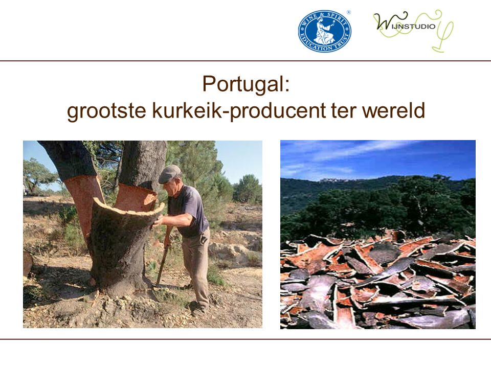 Portugal: grootste kurkeik-producent ter wereld