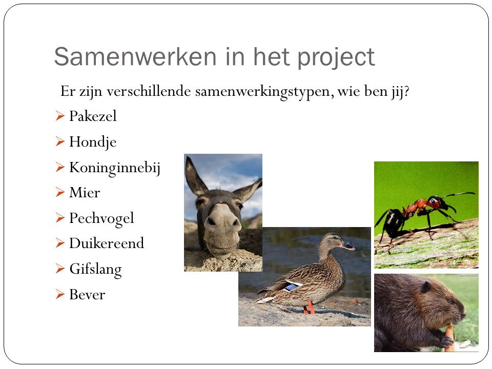 Samenwerken in het project