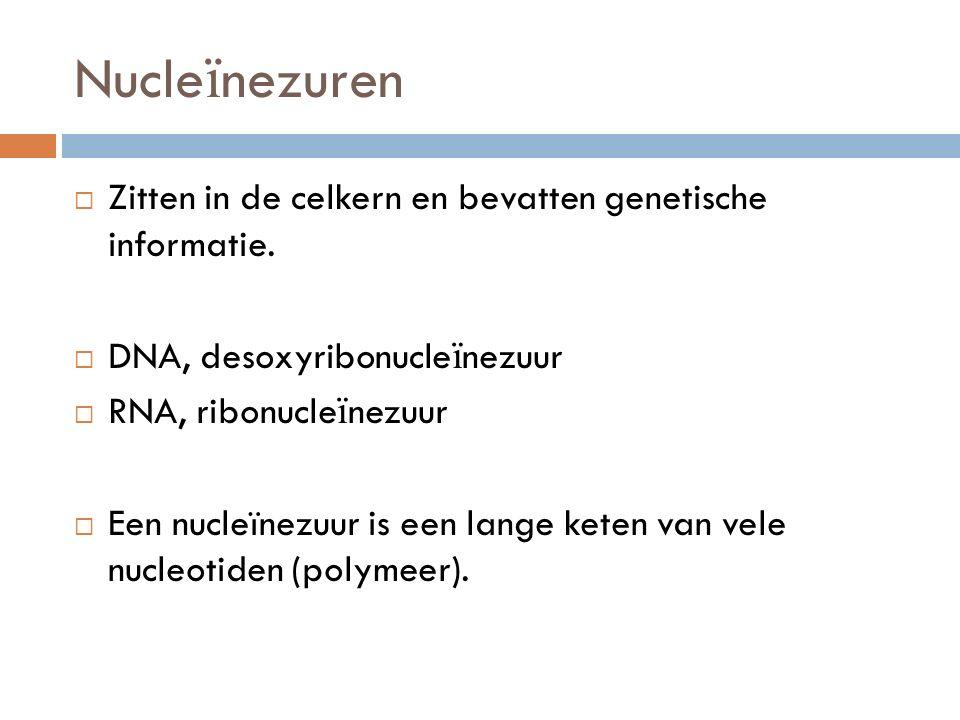 Nucleïnezuren Zitten in de celkern en bevatten genetische informatie.