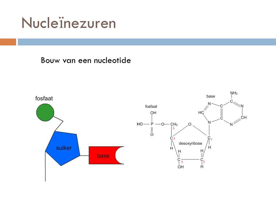 Nucleïnezuren Bouw van een nucleotide