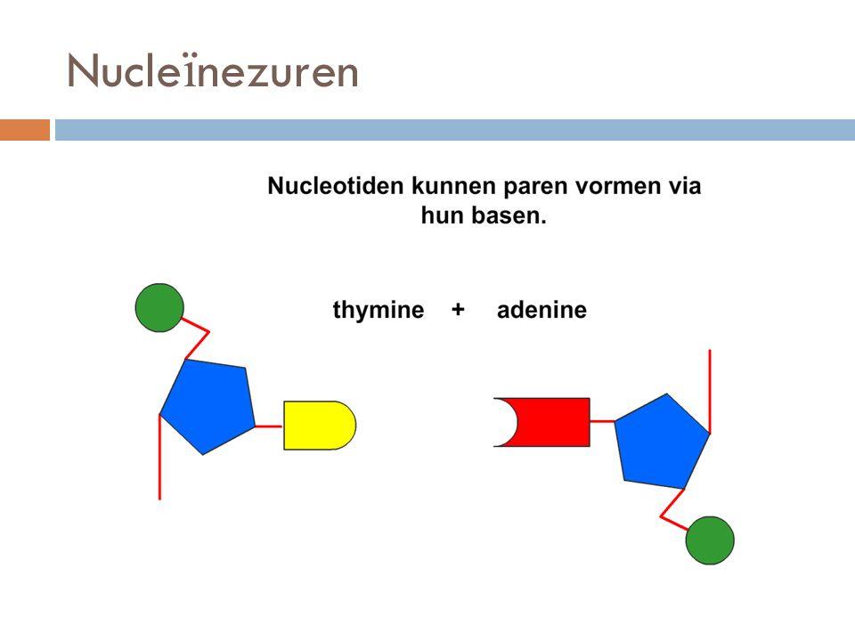 Nucleïnezuren
