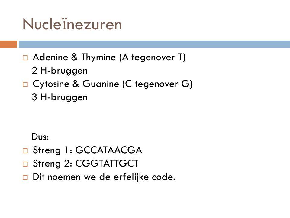 Nucleïnezuren Adenine & Thymine (A tegenover T) 2 H-bruggen