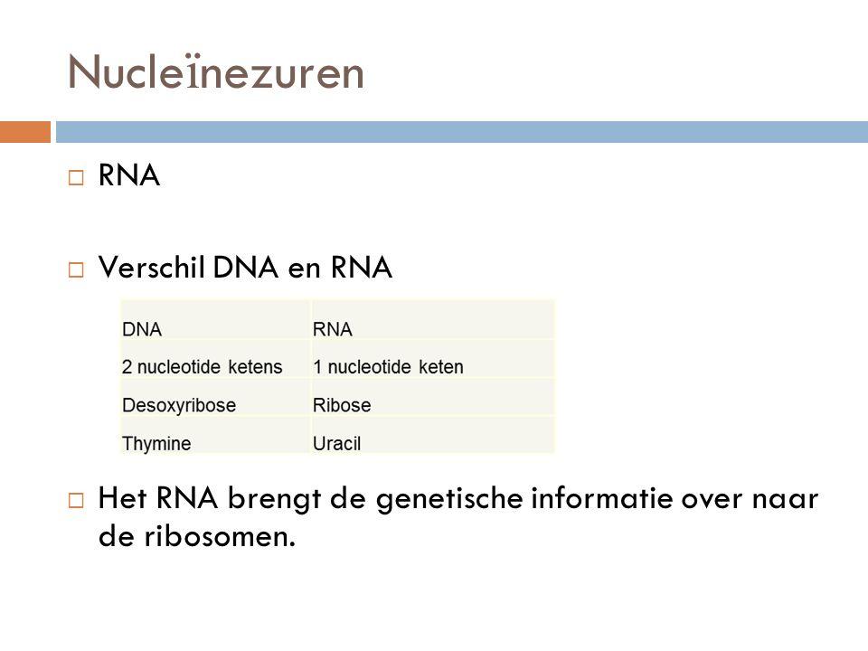 Nucleïnezuren RNA Verschil DNA en RNA