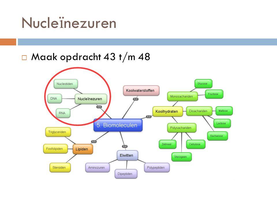 Nucleïnezuren Maak opdracht 43 t/m 48