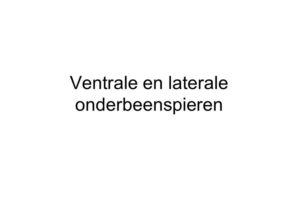 Ventrale en laterale onderbeenspieren