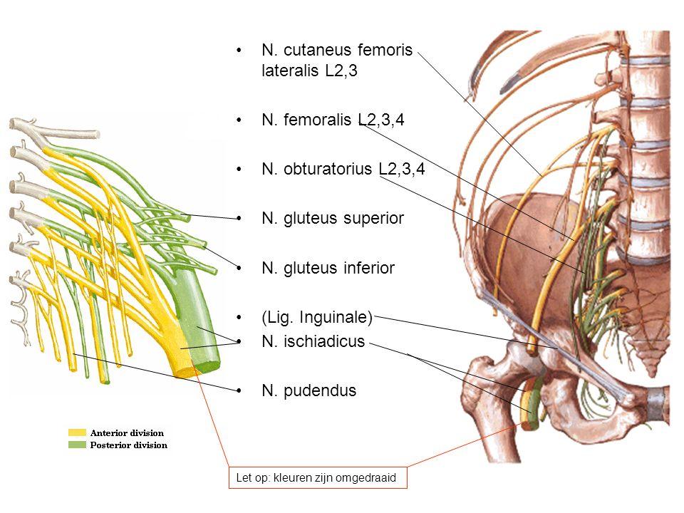 N. cutaneus femoris lateralis L2,3