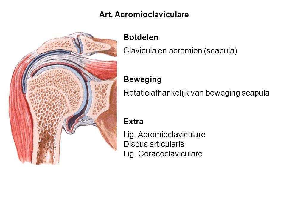 Art. Acromioclaviculare