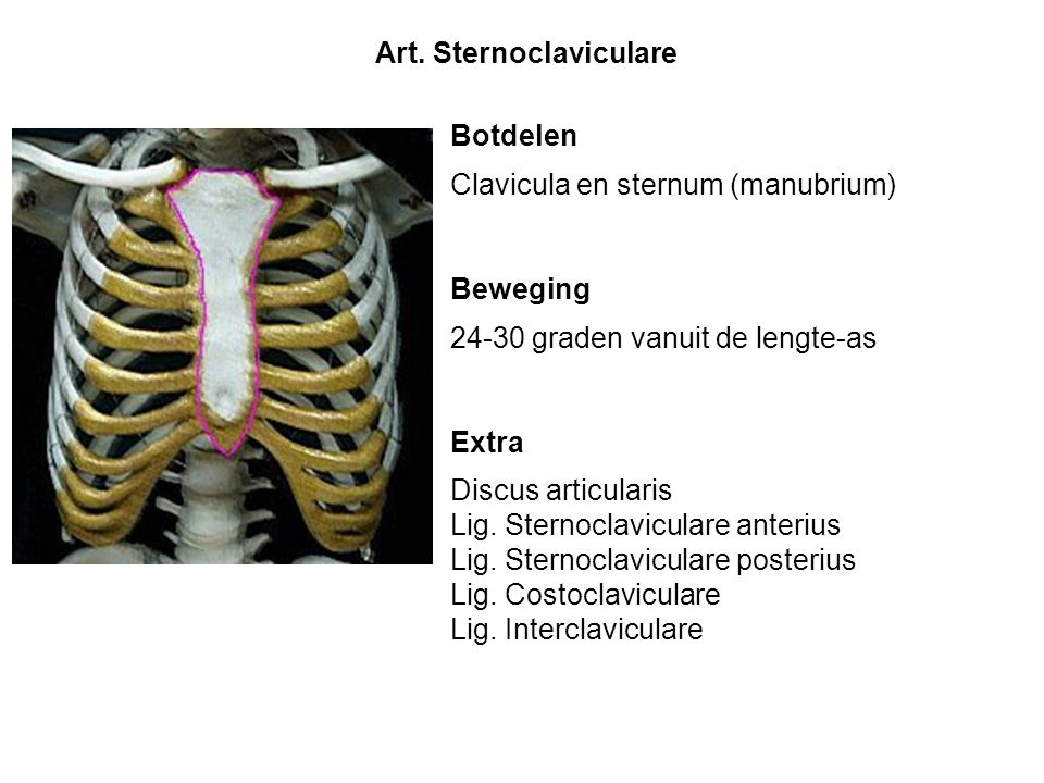 Art. Sternoclaviculare