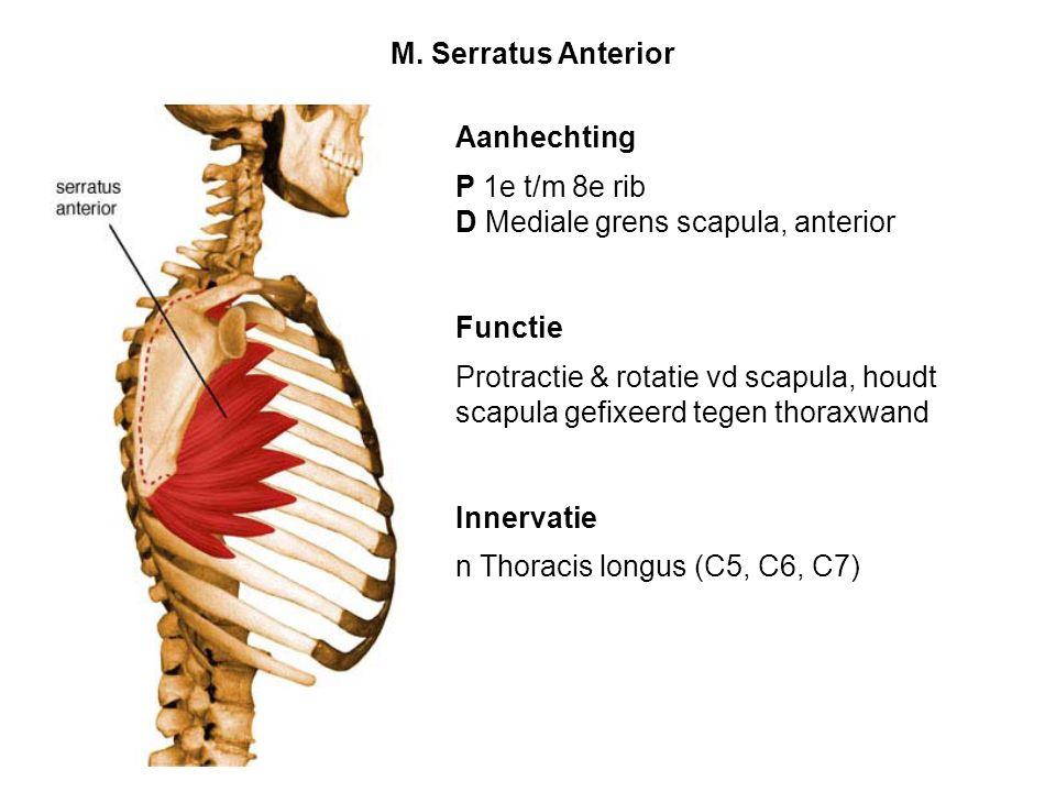 M. Serratus Anterior Aanhechting. P 1e t/m 8e rib. D Mediale grens scapula, anterior. Functie.