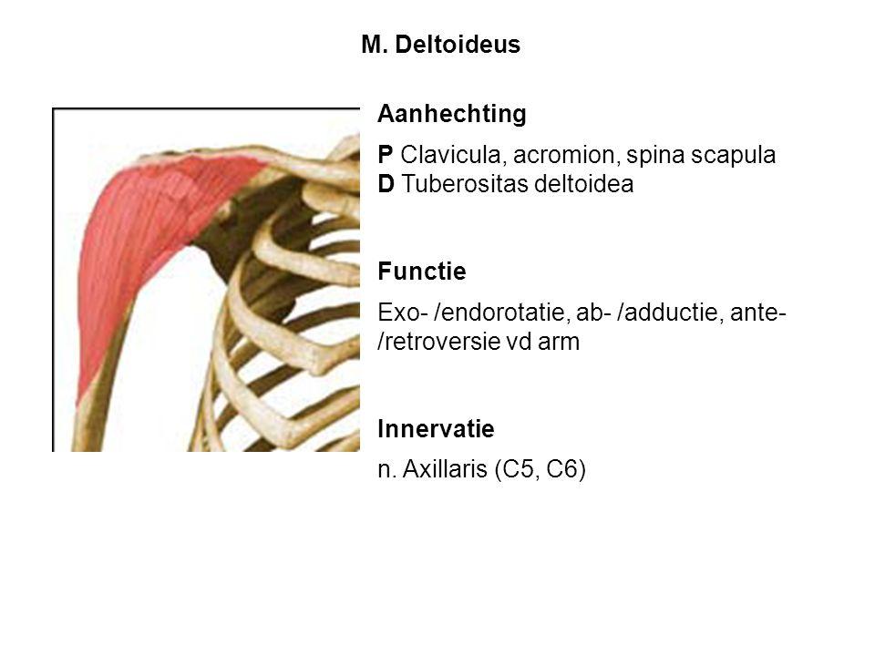 M. Deltoideus Aanhechting. P Clavicula, acromion, spina scapula. D Tuberositas deltoidea. Functie.