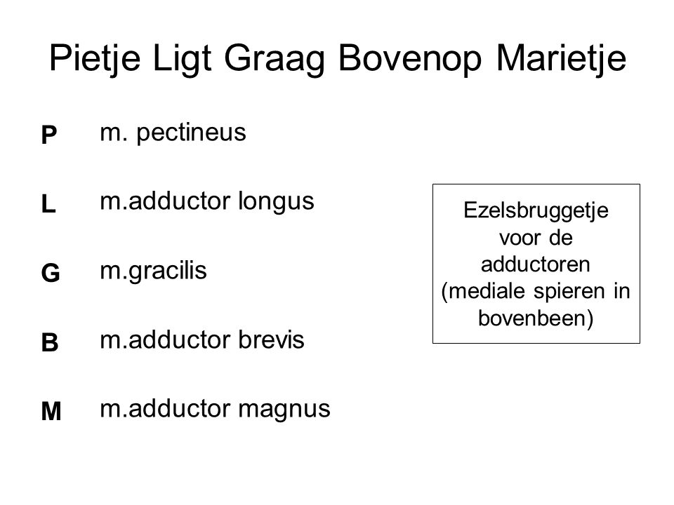 Ezelsbruggetje voor de adductoren (mediale spieren in bovenbeen)