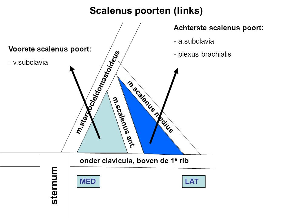 Scalenus poorten (links)