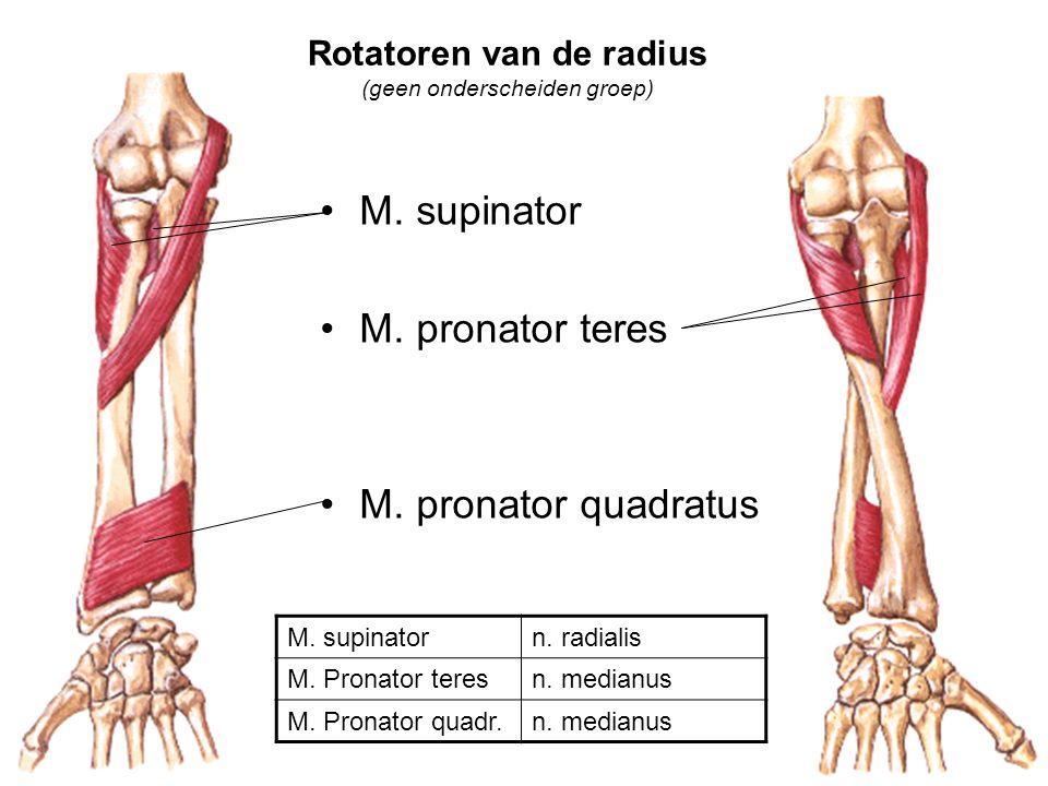 Rotatoren van de radius (geen onderscheiden groep)