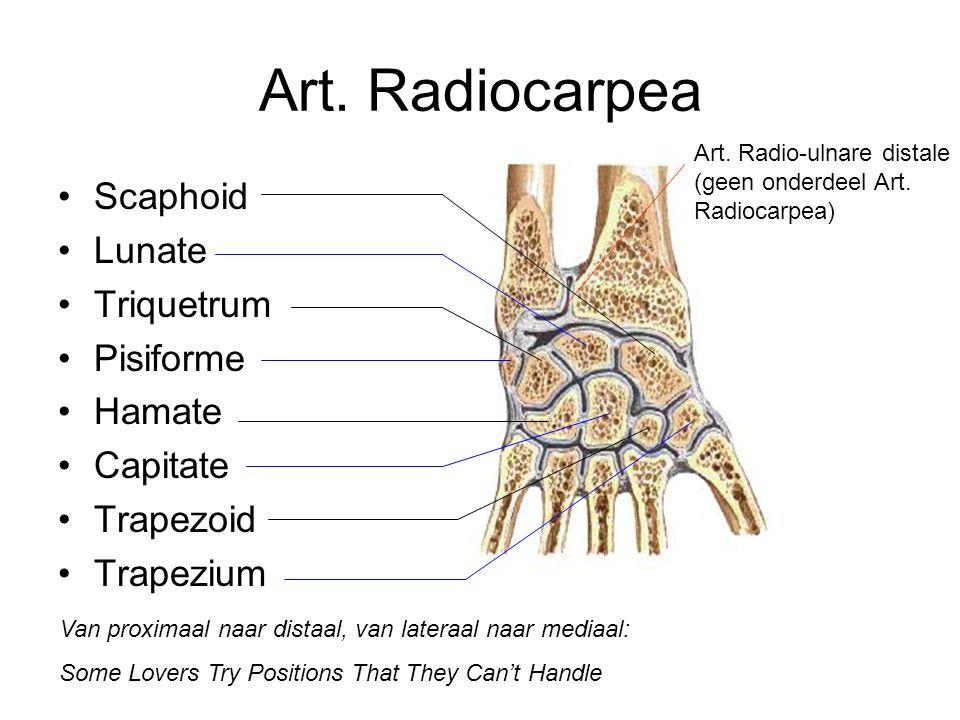 Art. Radiocarpea Scaphoid Lunate Triquetrum Pisiforme Hamate Capitate