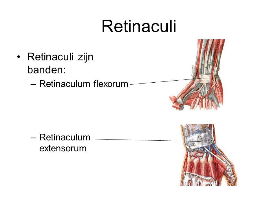 Retinaculi Retinaculi zijn banden: Retinaculum flexorum
