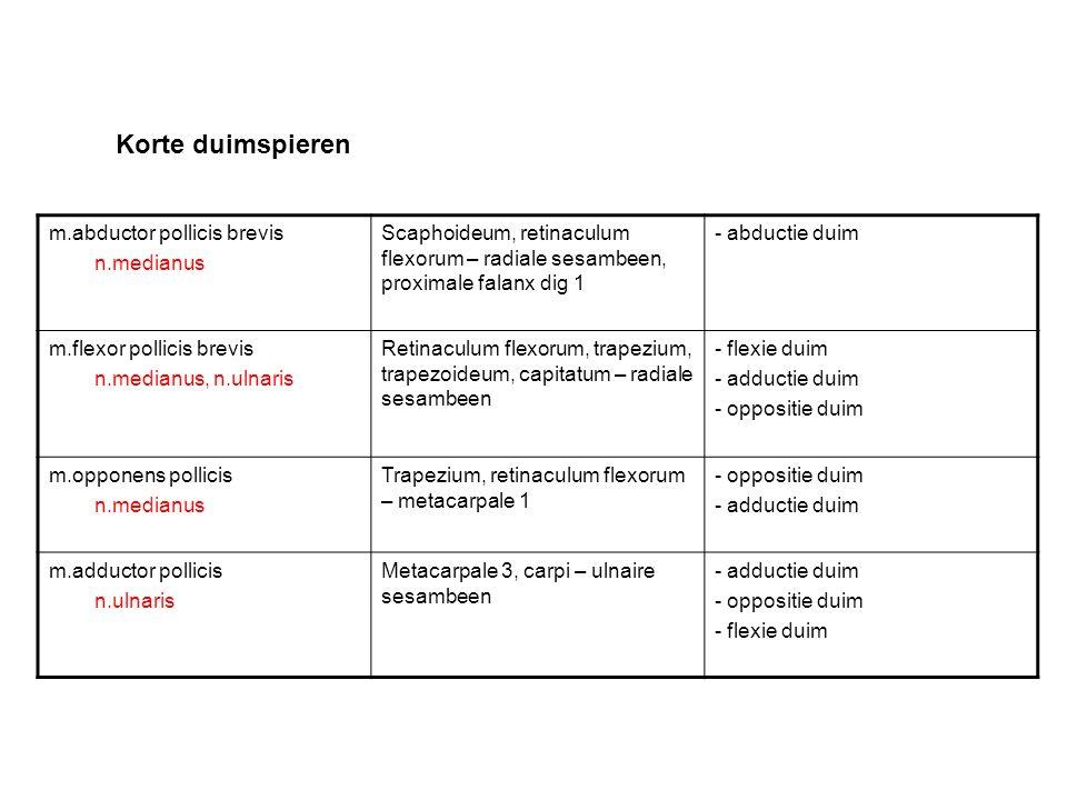 Korte duimspieren m.abductor pollicis brevis n.medianus