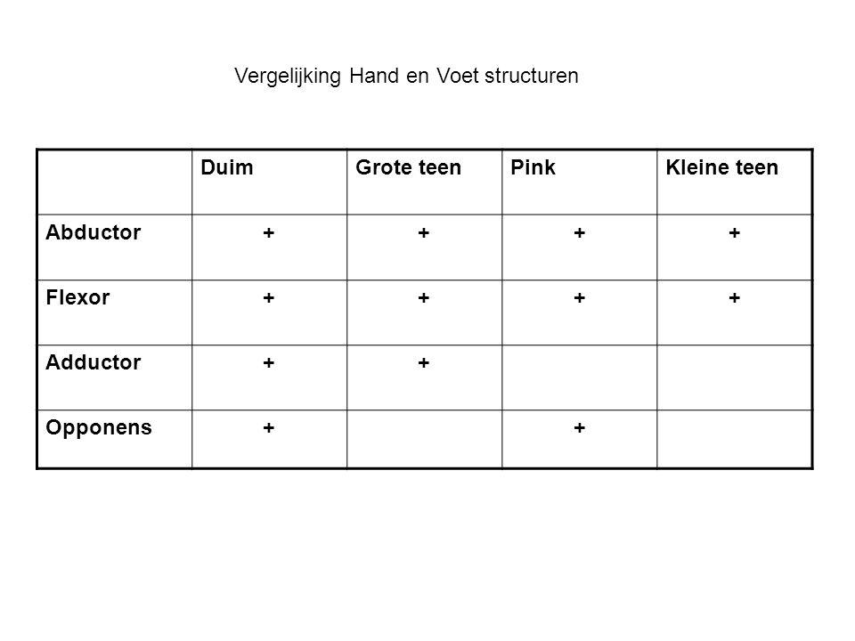 Vergelijking Hand en Voet structuren