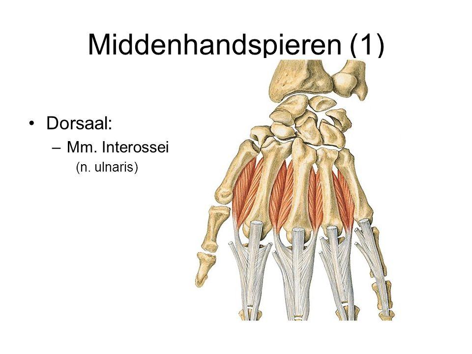 Middenhandspieren (1) Dorsaal: Mm. Interossei (n. ulnaris)