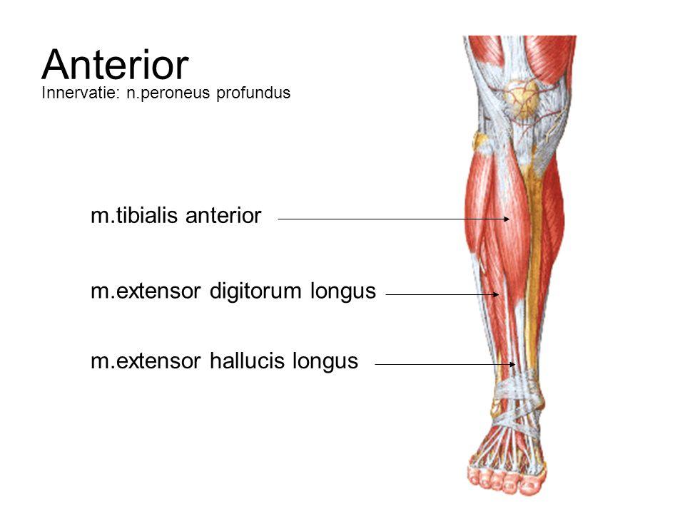 intrinsieke spieren van de hand ppt download