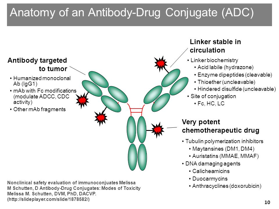 Anatomy of an Antibody-Drug Conjugate (ADC)