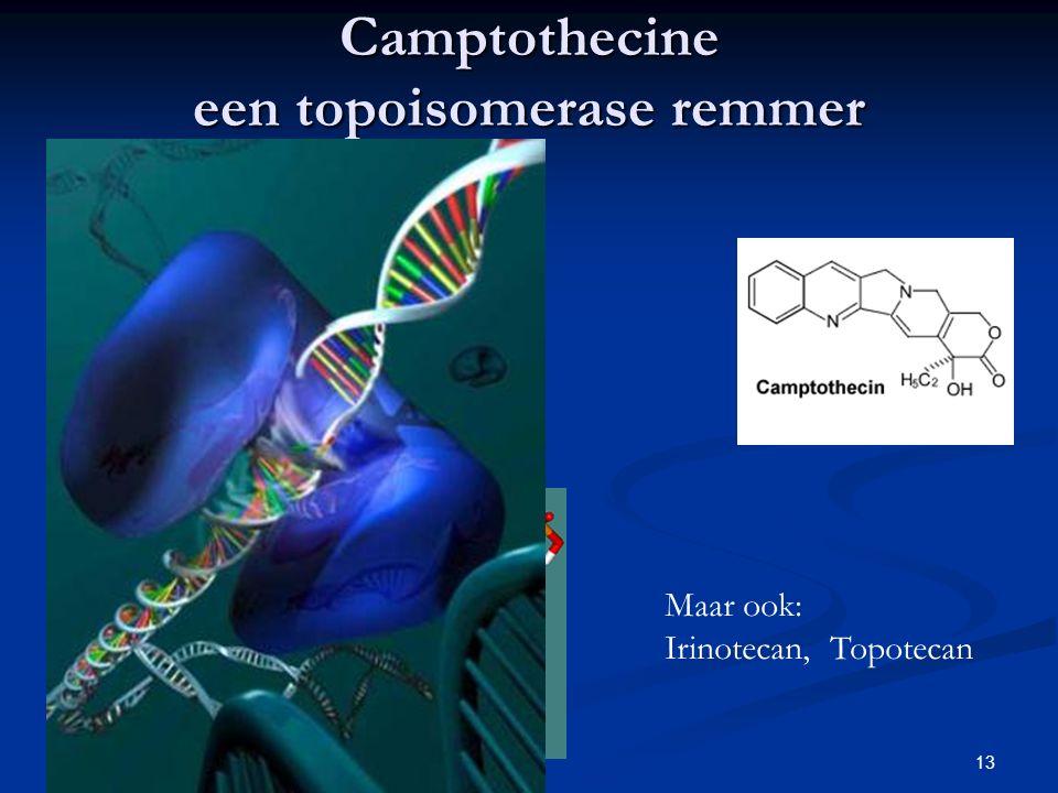 Camptothecine een topoisomerase remmer