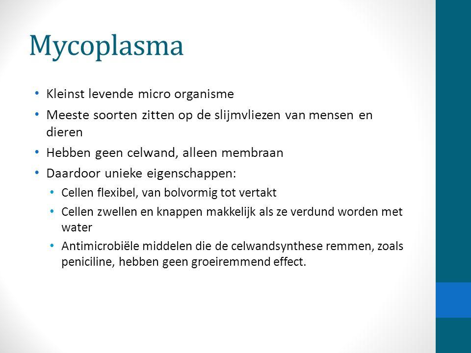 Mycoplasma Kleinst levende micro organisme