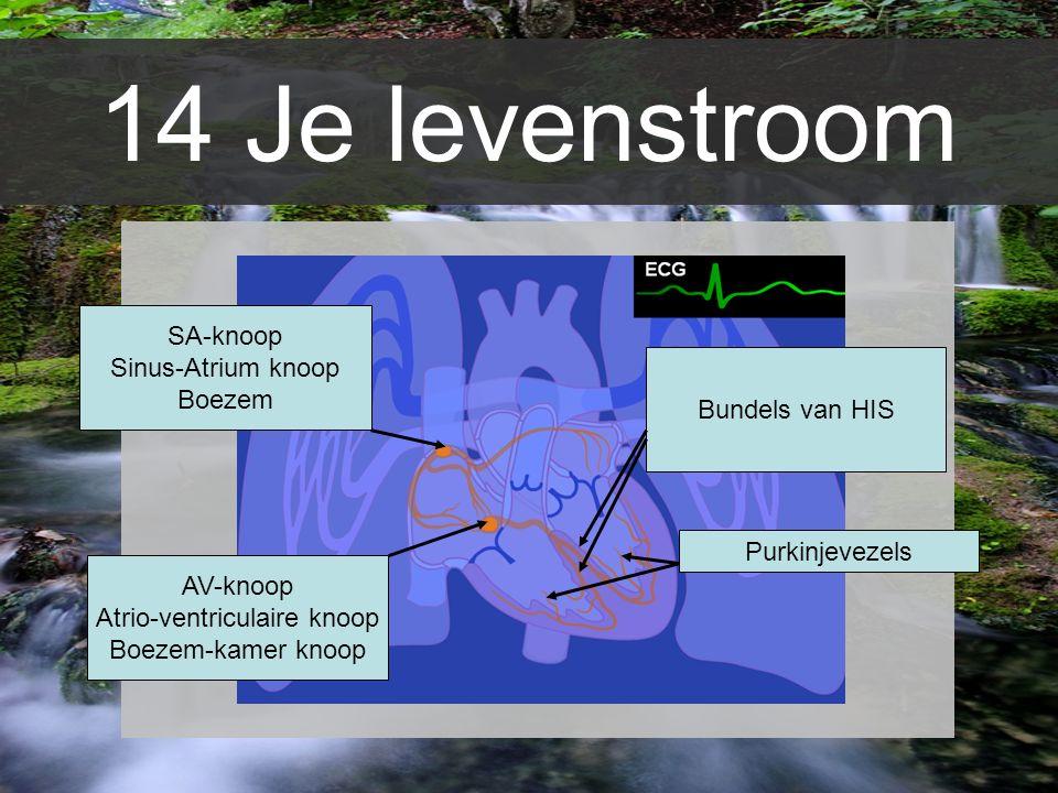 Atrio-ventriculaire knoop