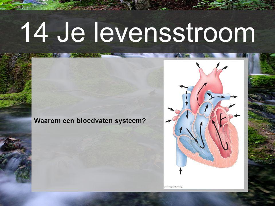 14 Je levensstroom Waarom een bloedvaten systeem