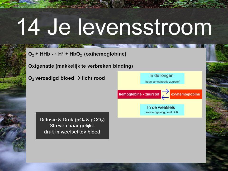 14 Je levensstroom O2 + HHb ↔ H+ + HbO2 (oxihemoglobine)