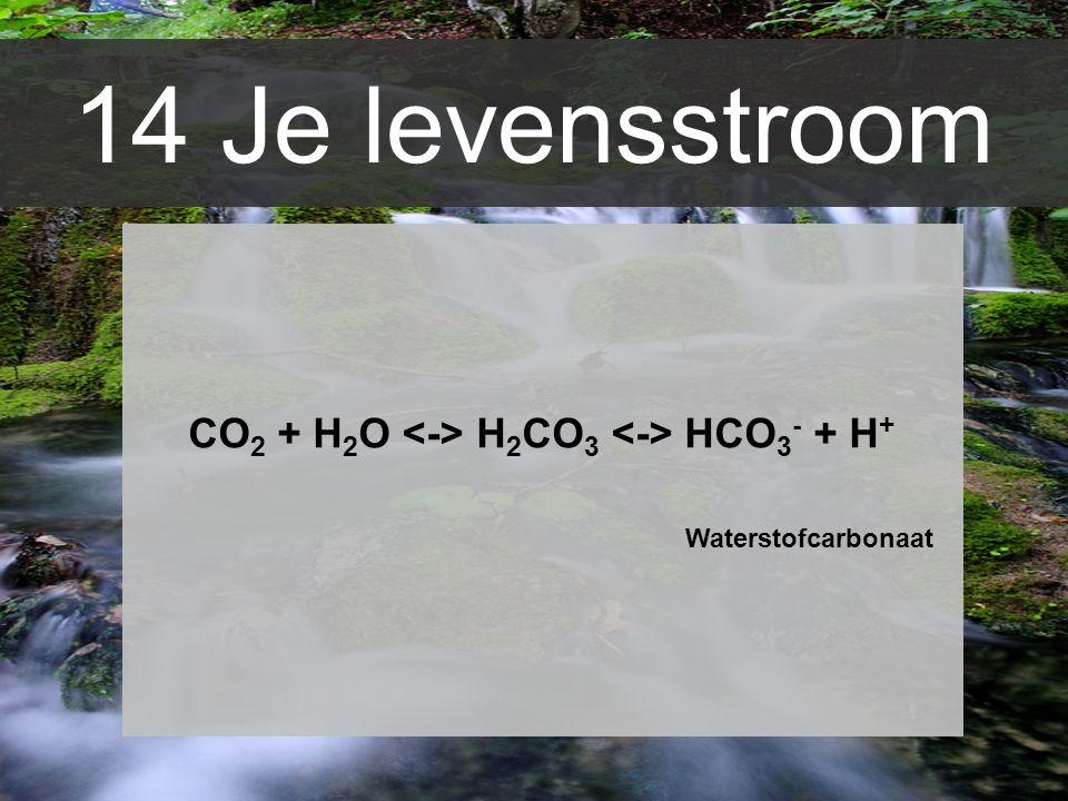 CO2 + H2O <-> H2CO3 <-> HCO3- + H+