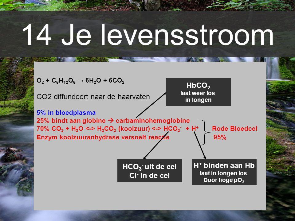 14 Je levensstroom CO2 diffundeert naar de haarvaten HbCO2