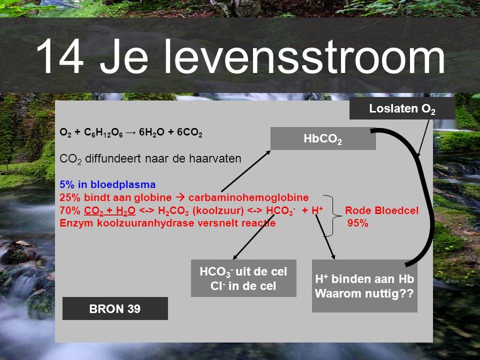 14 Je levensstroom Loslaten O2 CO2 diffundeert naar de haarvaten HbCO2