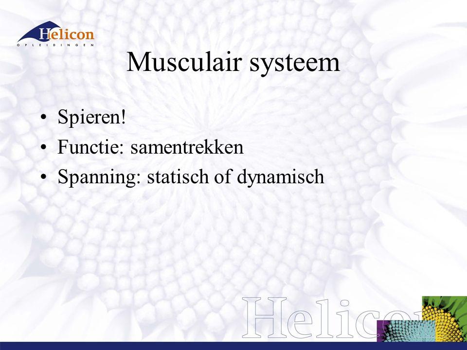 Musculair systeem Spieren! Functie: samentrekken