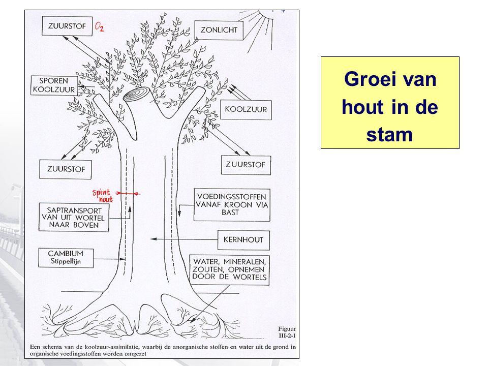 Groei van hout in de stam