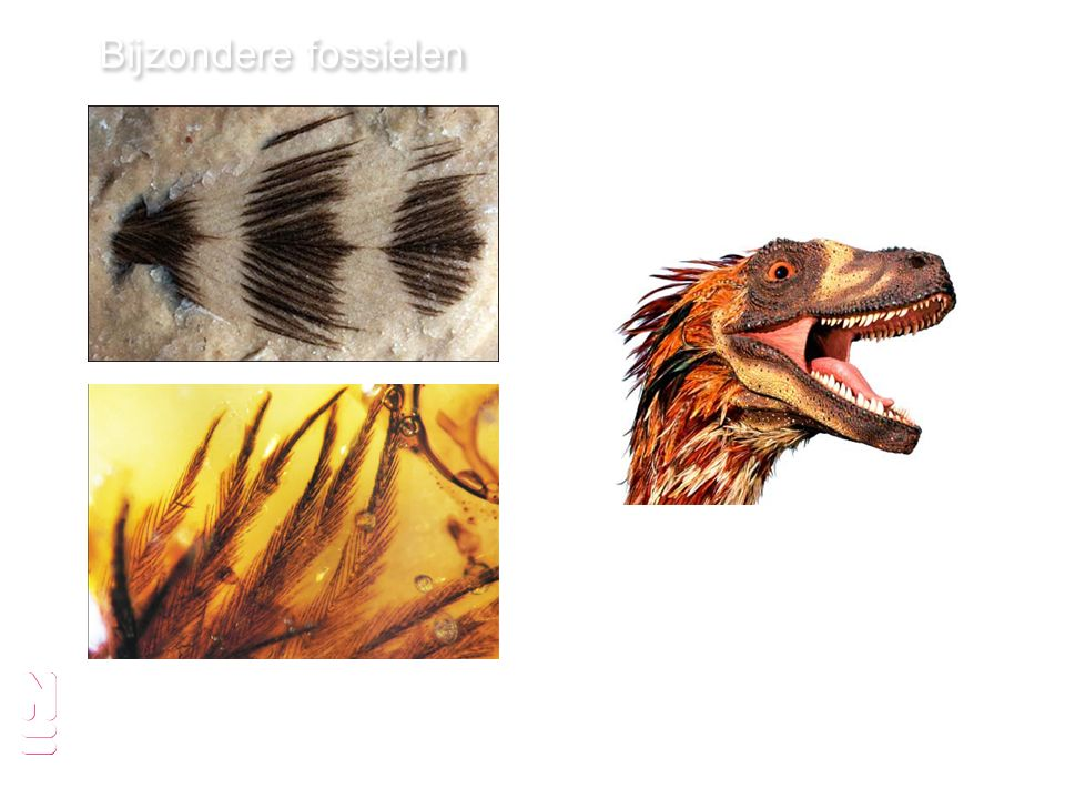 Bijzondere fossielen