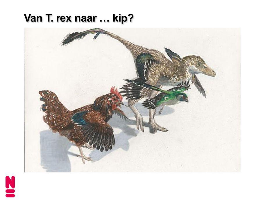 Van T. rex naar … kip.