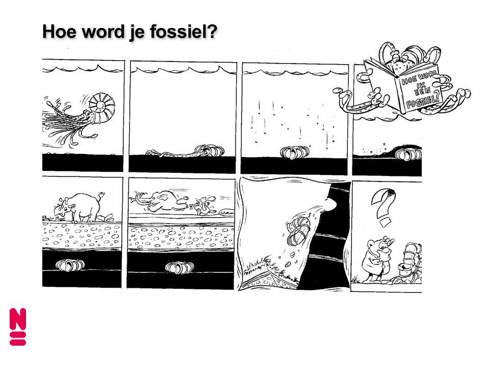 Hoe word je fossiel Dit plaatje illustreert hoe een fossiel zou kunnen ontstaan.