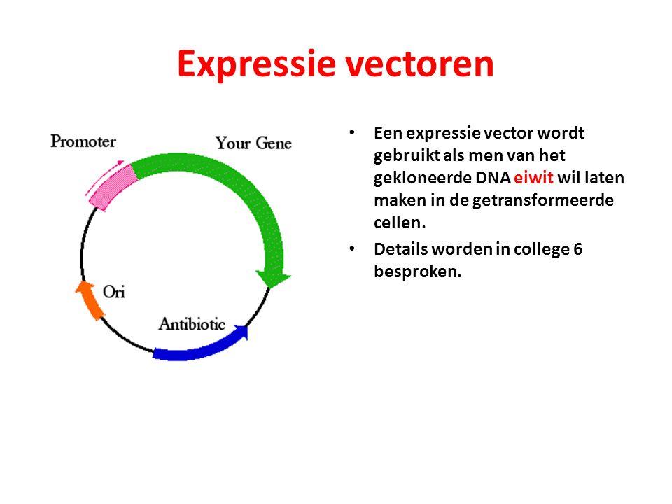 Expressie vectoren Een expressie vector wordt gebruikt als men van het gekloneerde DNA eiwit wil laten maken in de getransformeerde cellen.