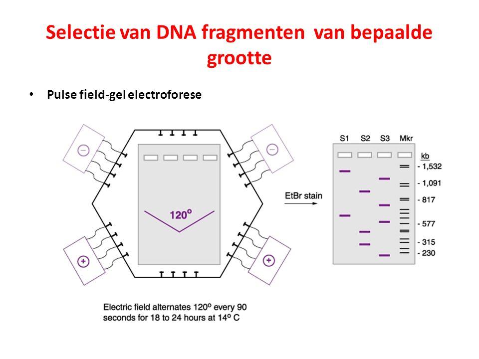 Selectie van DNA fragmenten van bepaalde grootte