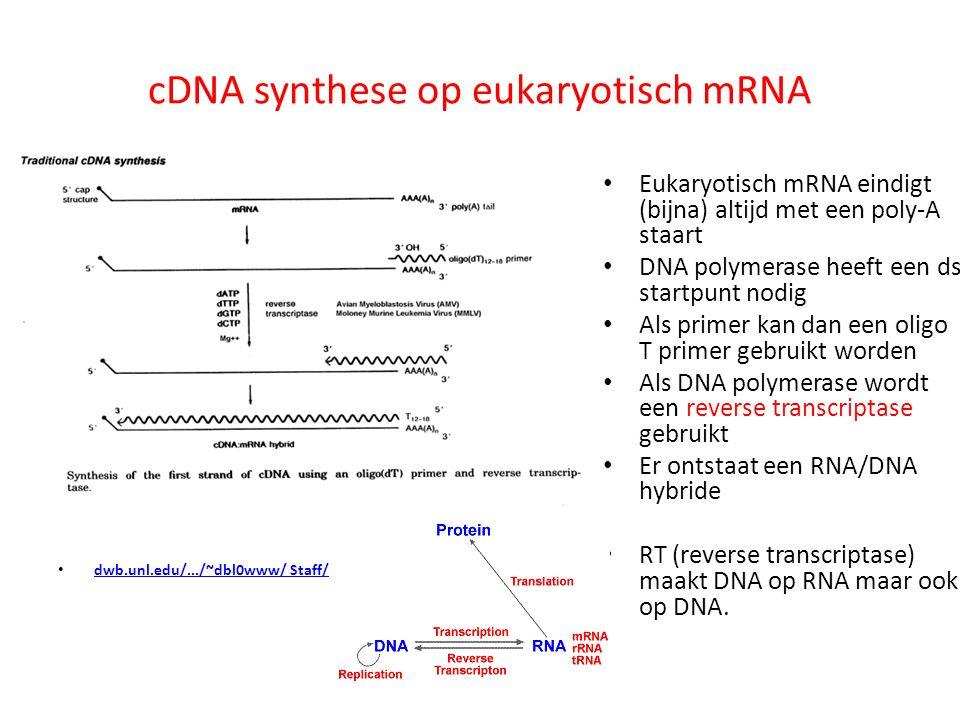 cDNA synthese op eukaryotisch mRNA