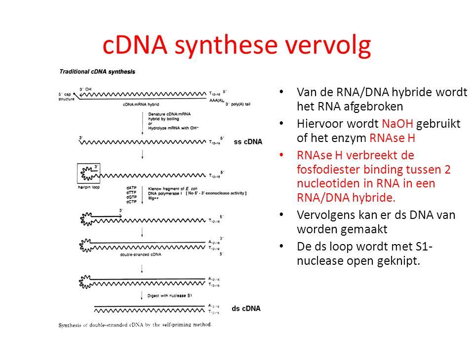 cDNA synthese vervolg Van de RNA/DNA hybride wordt het RNA afgebroken