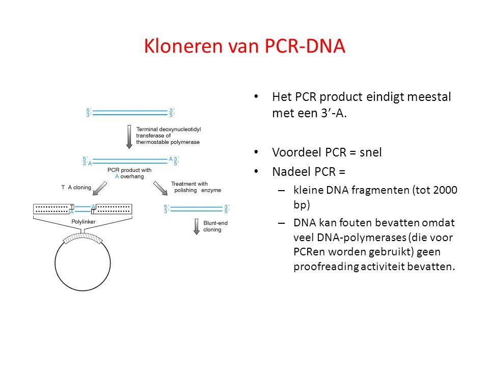 Kloneren van PCR-DNA Het PCR product eindigt meestal met een 3'-A.