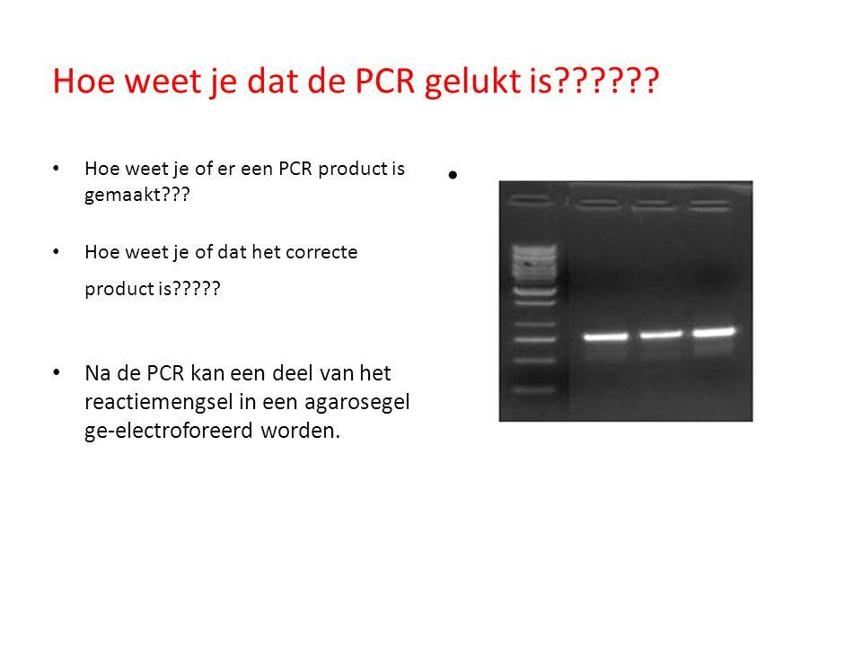 Hoe weet je dat de PCR gelukt is